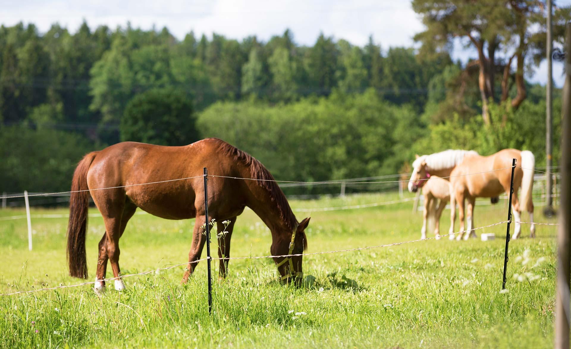 pinsiön ratsastuskoulu